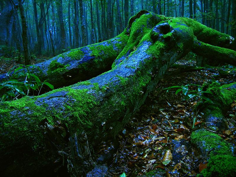 伏してなお語り続ける倒木の声に耳を澄ませる