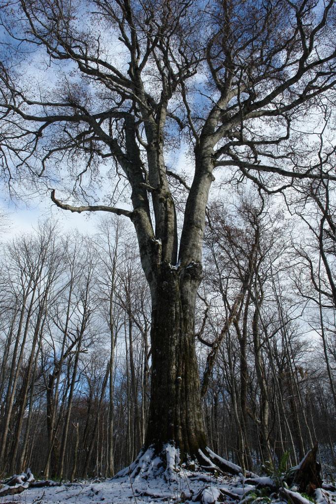 人はなぜ巨樹に魅かれるのだろう