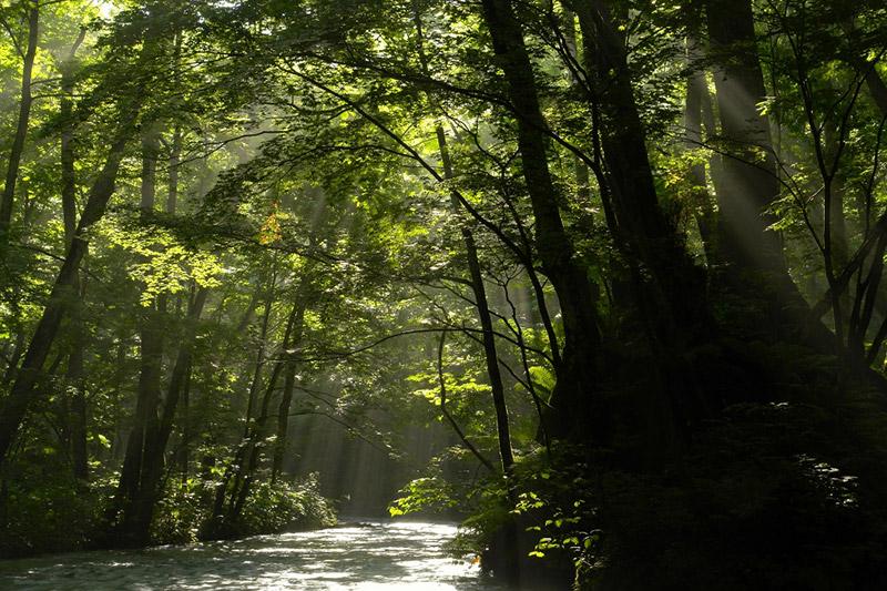 森のない渓流は、ただの水の流れにすぎない