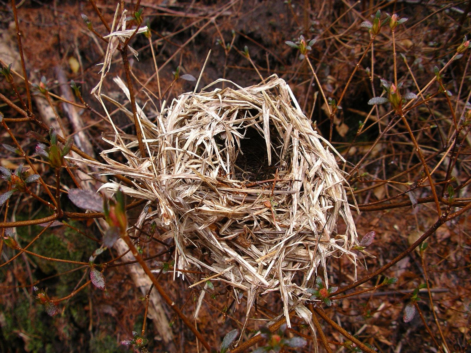 路傍で見つけた、ひみつの鳥の巣